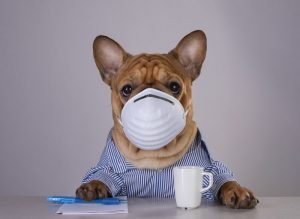 Stuck Inside? 3 Tips To Keep Your Dog Entertained During The Coronavirus Lockdown