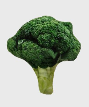 Canvas Squeaky Soft Toy Broccoli
